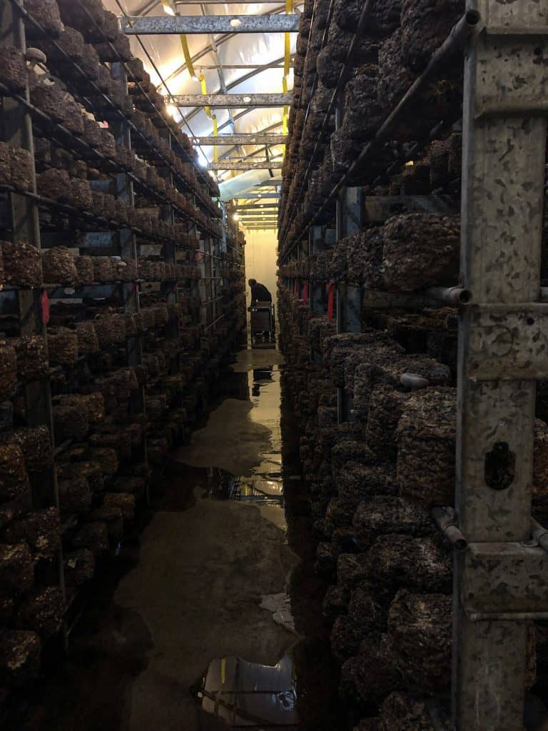 A look inside a local mushroom farm.